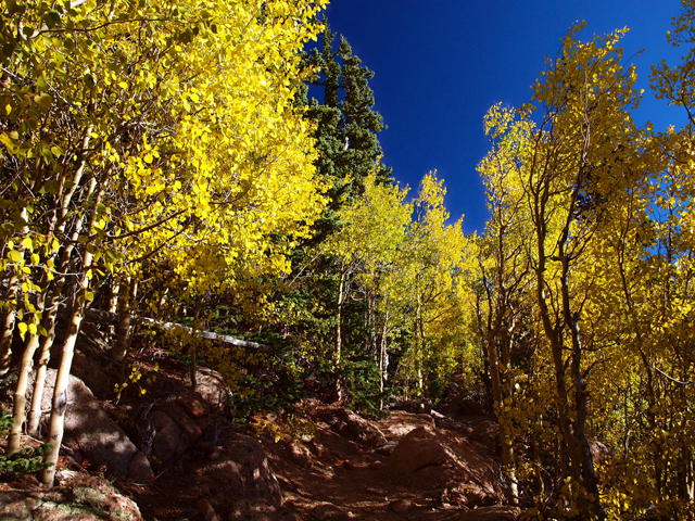 Pikes Peak, aspen, aspens, fall color, fall colors, shinrinyoku, forest bath