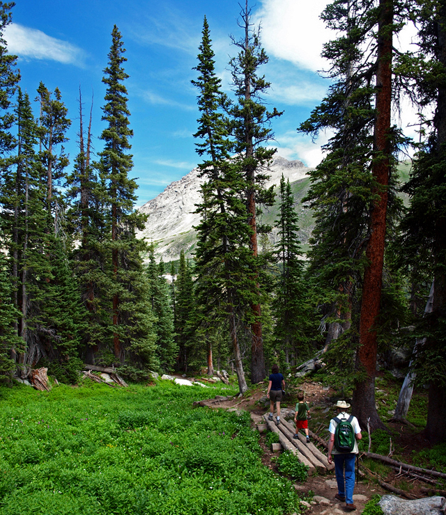 alpine, forest, colorado, hiking, family, people, nature, shinrin-yoku, forest bath, forest bathing