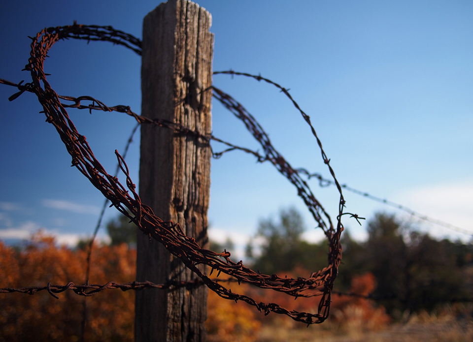 fence, loop, wire, barbed wire, fall, west, boundary, fenceline, limit