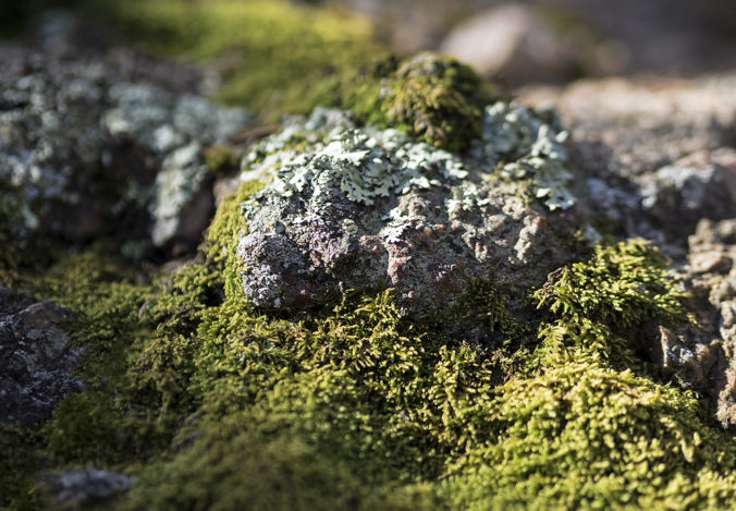 moss, mosses, modest, sustainable, sustainability, biomimicry