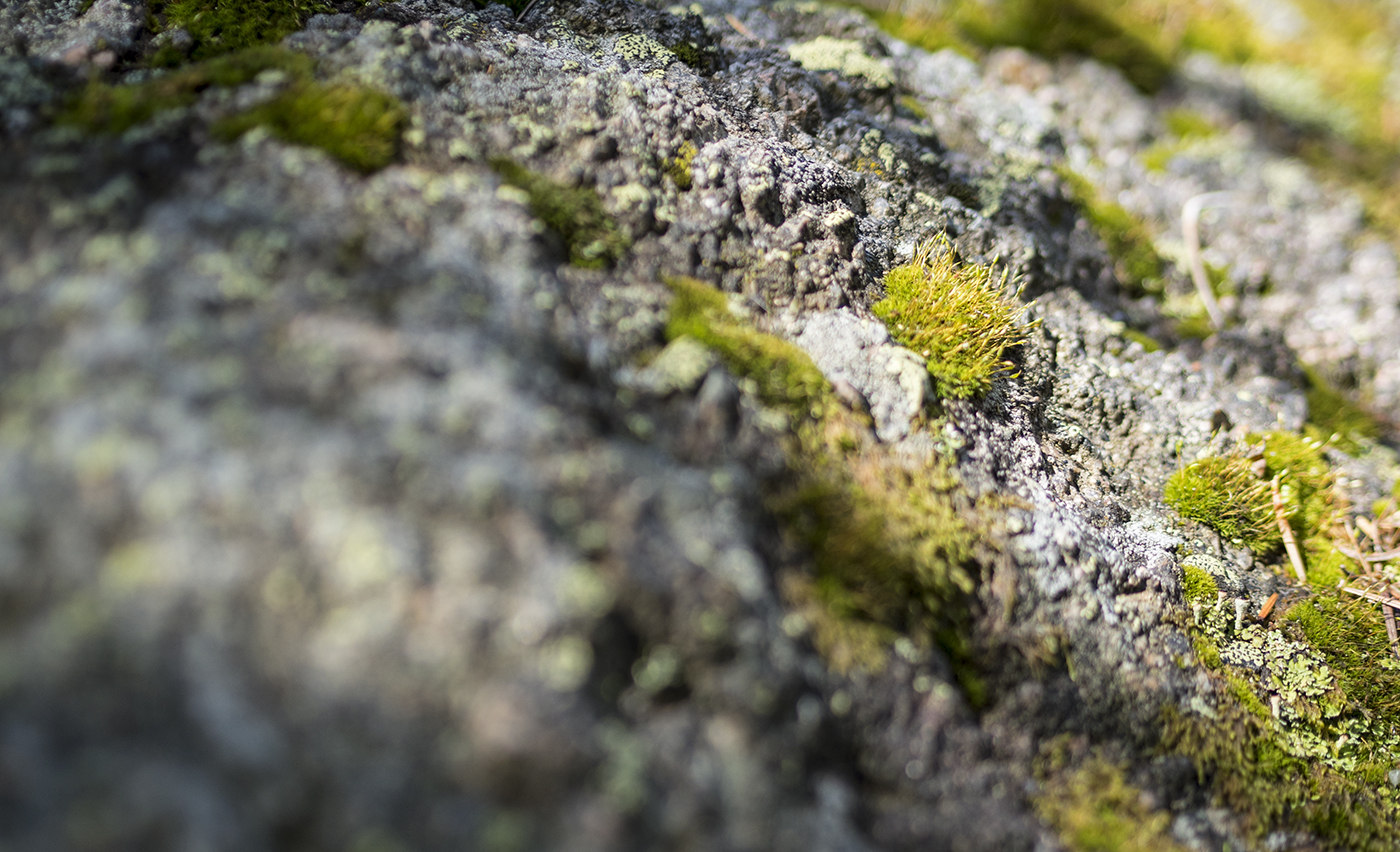 moss, mosses, plants, plant life, sustainable, sustainability, biomimicry
