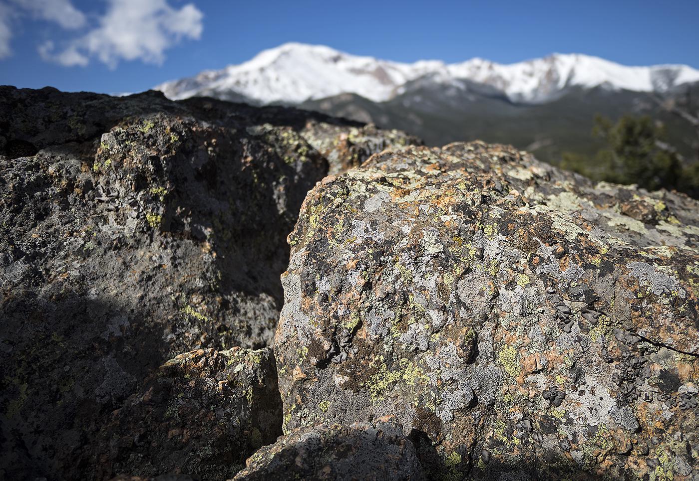 moss, mosses, lichen, mountains