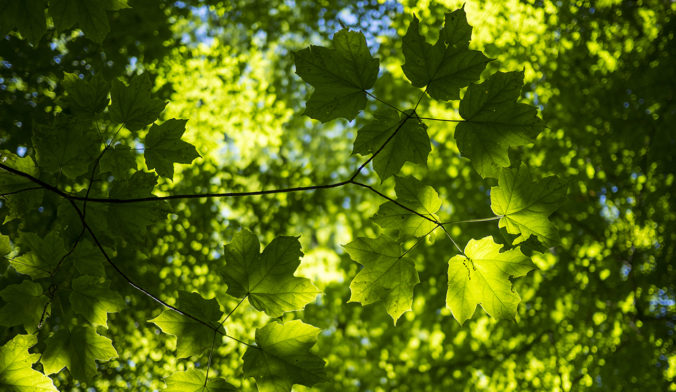 tree canopy, green leaves, green, sustainable, sustainability progress, sustainable cities, Grand Rapids, Michigan